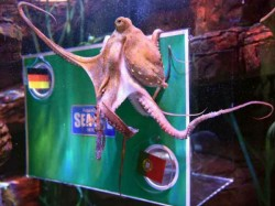 Regina New Octopus To Predict World Cup Results