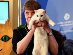 Psychic Cat Makes Predicts First Winner Of World Cup Football